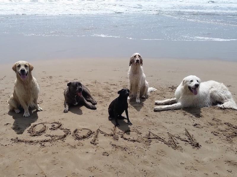 Boncan Adiestramiento Canino Barcelona