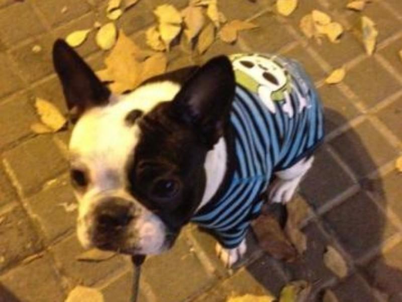 Adiestramiento Bulldog Francés