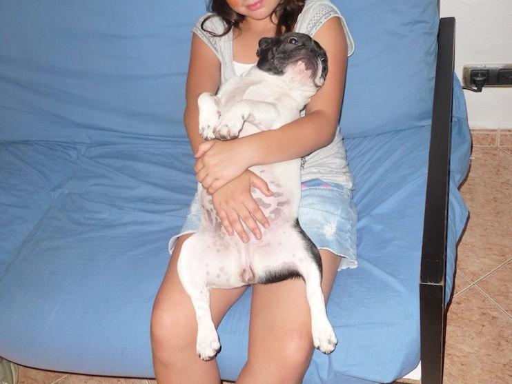 Boncan, adiestramiento, educación y modificación de conducta canina en Barcelona - Adiestramiento Bulldog