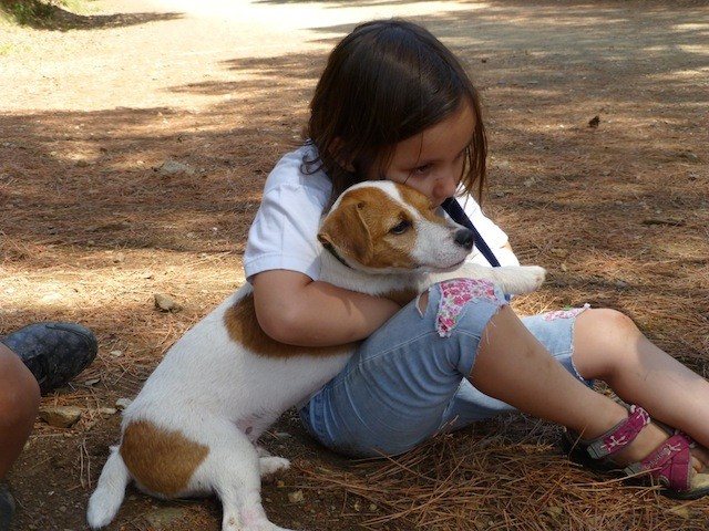 Boncan, adiestramiento, educación y modificación de conducta canina en Barcelona - Te quiere tu perro. Blog Boncan
