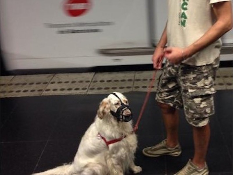 Con perro en el metro de Barcelona