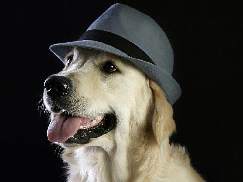 Boncan, Educación canina. Refranes,citas y frases sobre perros.
