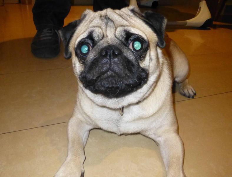 Adiestramiento Boncan educacion canina vision ultravioleta perro