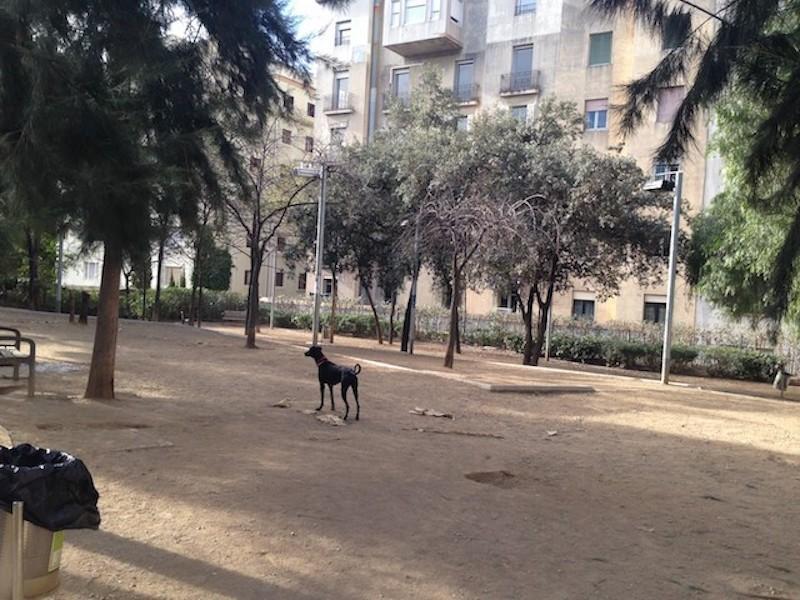 Adiestramiento Boncan educacion canina-ocio perruno barcelona