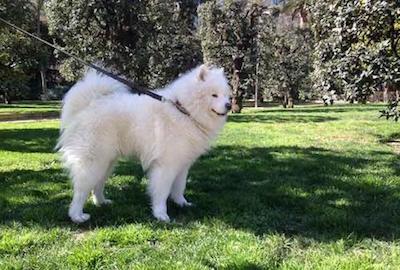 Perro con correa en un parque