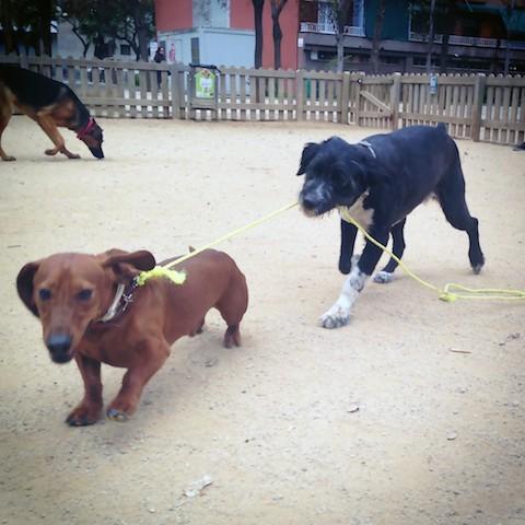 Efecto de ir al parque en perros