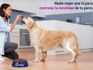 Boncan, adiestramiento, educación y modificación de conducta canina en Barcelona - Perro grabando anuncio de Advance en Barcelona.