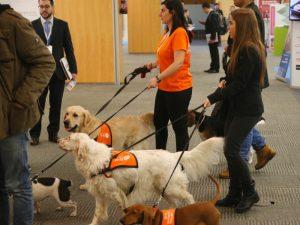 Boncan, adiestramiento, educación y modificación de conducta canina en Barcelona - Trabajo publicitario de Affinity con perros.