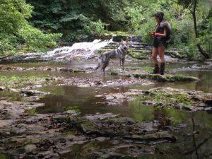 Boncan, adiestramiento, educación y modificación de conducta canina en Barcelona - Grabación de un anuncio con un perro lobo.