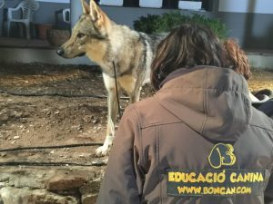 Boncan, adiestramiento, educación y modificación de conducta canina en Barcelona