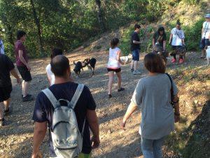 Boncan, adiestramiento, educación y modificación de conducta canina en Barcelona - Paseos de socialización en Barcelona
