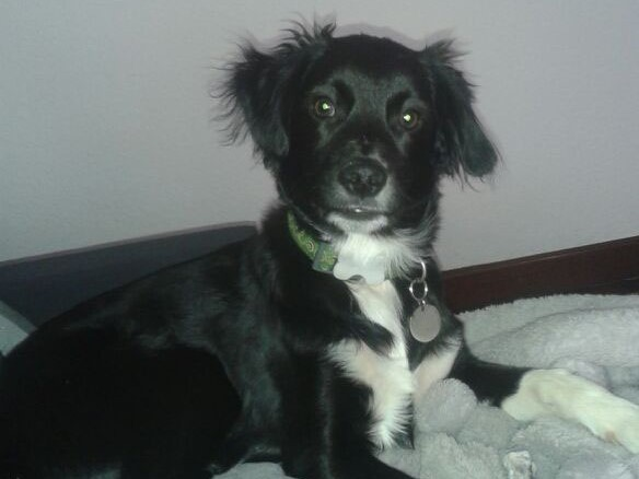 Boncan, adiestramiento, educación y modificación de conducta canina en Barcelona - Perro Mezcla