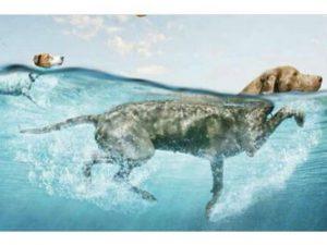 Boncan, adiestramiento, educación y modificación de conducta canina en Barcelona - Perros grabando anuncio en Barcelona.