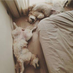 Boncan, adiestramiento, educación y modificación de conducta canina en Barcelona - Artículo sobre el descanso en para los perros.