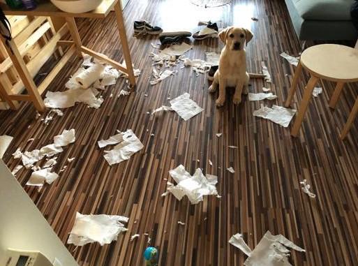 Boncan, adiestramiento, educación y modificación de conducta canina en Barcelona - Artículo sobre la ansiedad y el estrés posvacacional en nuestros perros.