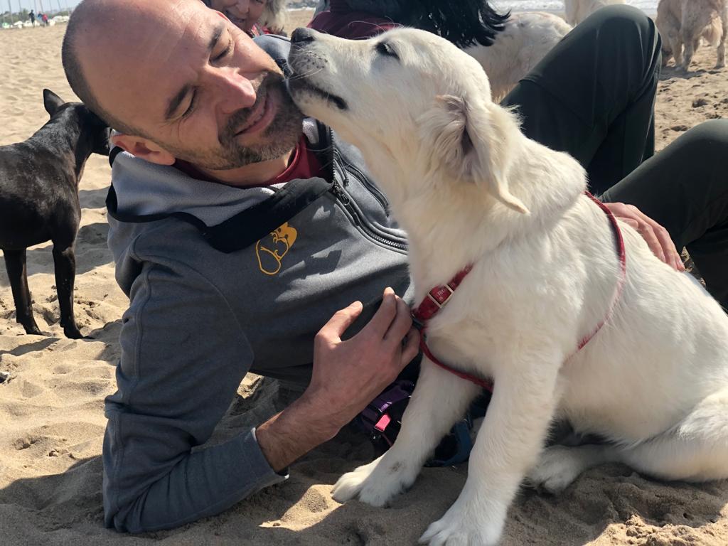 Boncan, adiestramiento, educación y modificación de conducta canina en Barcelona - Carta a nuestros mejores amigos