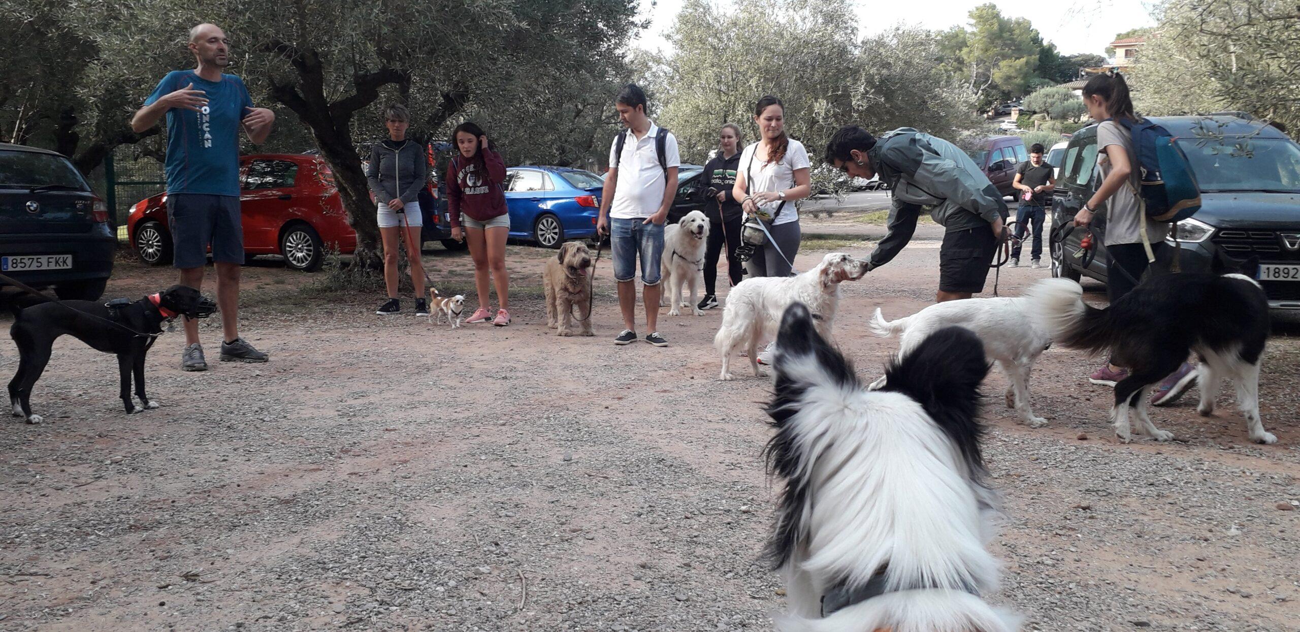 Boncan, adiestramiento, educación y modificación de conducta canina en Barcelona. Paseo de socialización.