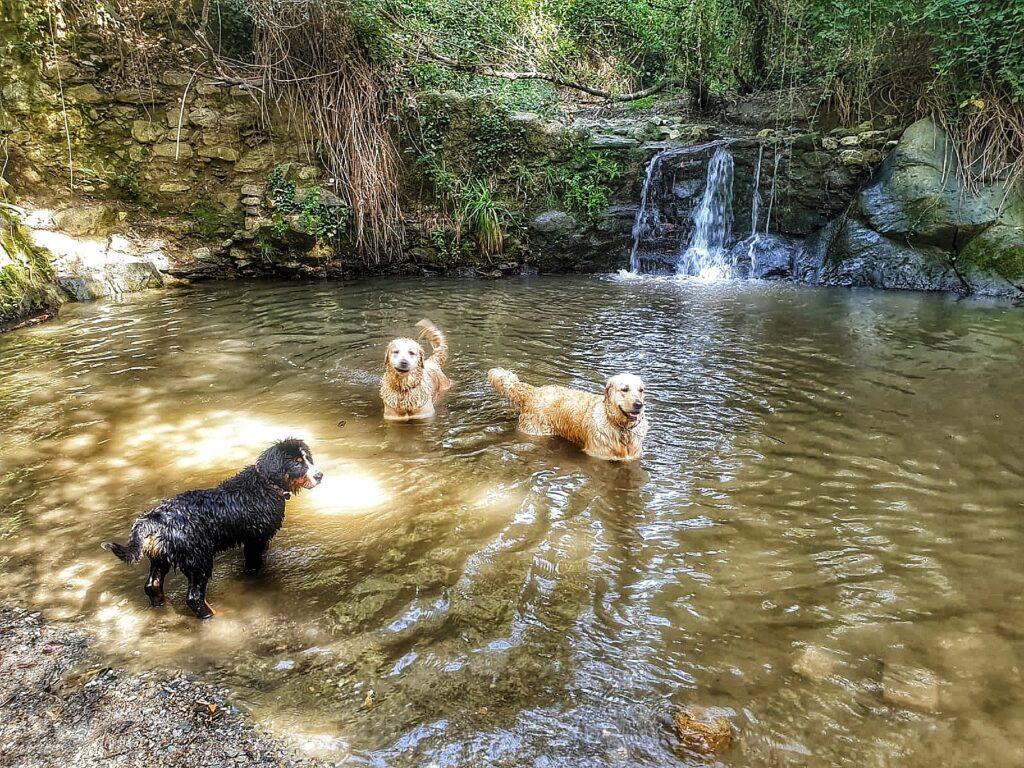 Boncan, adiestramiento, educación y modificación de conducta canina en Barcelona. Perros y petardos